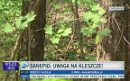 Sanepid: uwaga na kleszcze