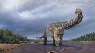 """""""Był tak długi jak boisko do koszykówki"""". W Australii odkryto nowy gatunek dinozaura"""