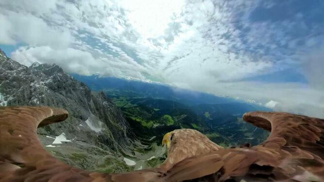 Pięć lodowców w pięć dni. <br />Zobacz Alpy z perspektywy bielika