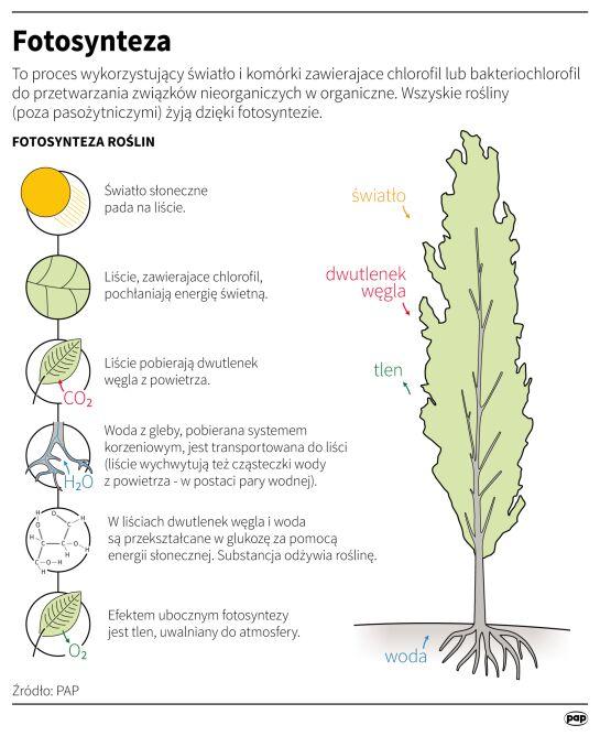 Drzewa pobierają dwutlenek węgla z powietrza (Maciej Zieliński/PAP)